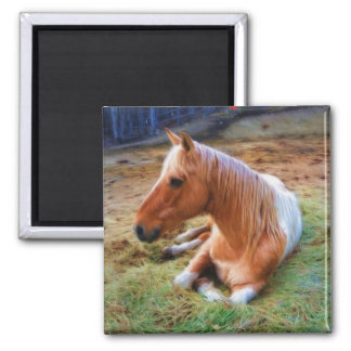 Aimant Illustration de repos de cheval de Pinto de