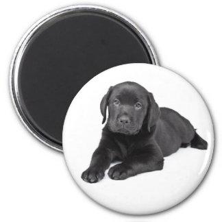 Aimant Laboratoire noir de noir de chiot de labrador