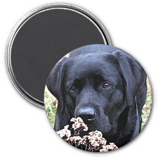 Aimant Labrador noir - prenez du temps