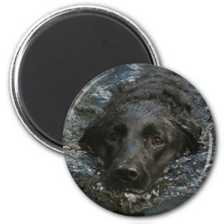 Aimant Labrador retriever noir personnalisable