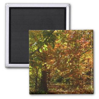 Aimant L'auvent de l'automne laisse à II la photographie