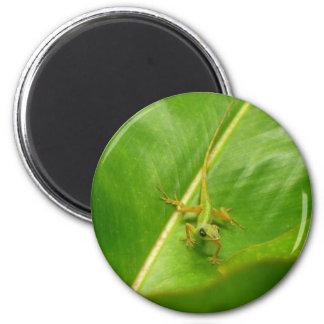 Aimant Lézard vert sur la feuille verte