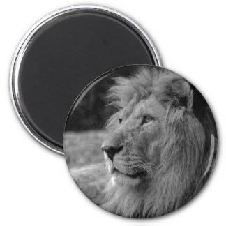Aimant Lion noir et blanc - animal sauvage