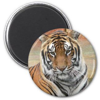 Aimant Locations Tigres dans la contemplation