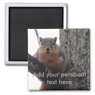 Aimant Mettez cet écureuil sur votre réfrigérateur