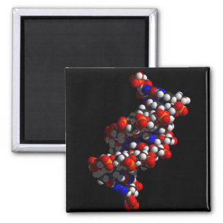 Aimant Modèle de double hélice d'ADN
