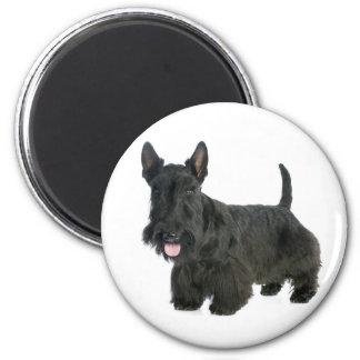 Aimant noir de chiot de Terrier d'écossais d'amour