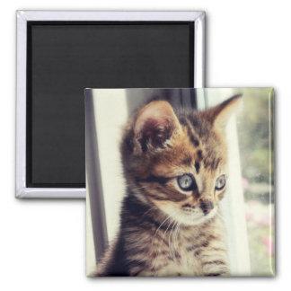 Aimant Observation tigrée de chaton