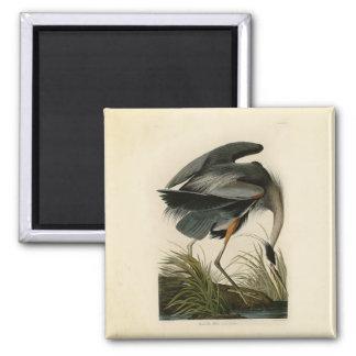 Aimant Oiseaux de héron de grand bleu d'Audubon