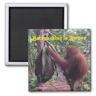 Aimant Orang-outan se baladant du Bornéo