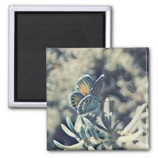 Aimant Painterly de papillon