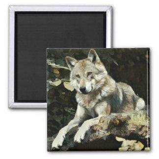 Aimant Peinture de loup de bois de construction