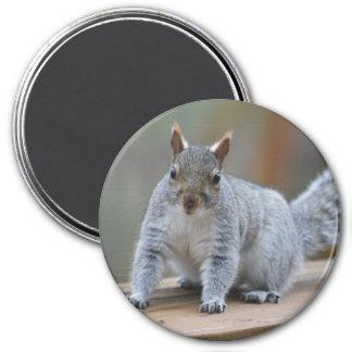 Aimant Photographie d'écureuil