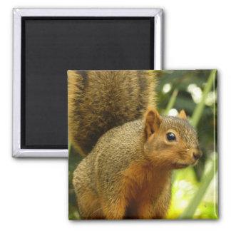 Aimant Portrait d'une photographie d'animal de nature
