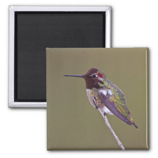 Aimant Repos de colibri