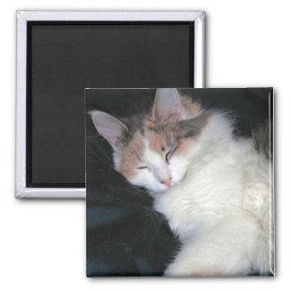 Aimant Sommeil dilué de chaton de calicot
