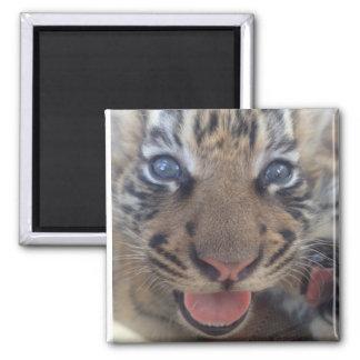 Aimant Tigre de bébé