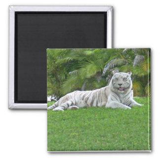 Aimant Tigre et palmiers blancs de sourire