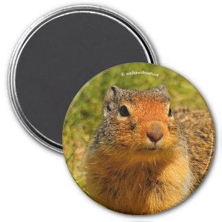Aimant Un écureuil moulu colombien Crispé-Flairé