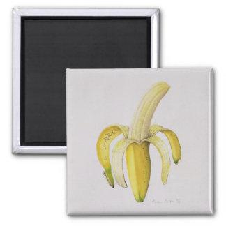 Aimant Une banane Moitié-épluchée 1997