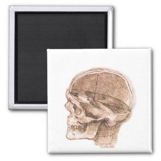 Aimant Vue d'un crâne Leonardo da Vinci