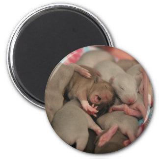 Aimant Yawning bébé rat
