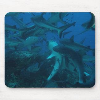 Alimentation de requin sur la Grande barrière de Tapis De Souris