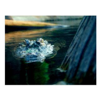 Alligator américain la Caroline du Nord de CARTE