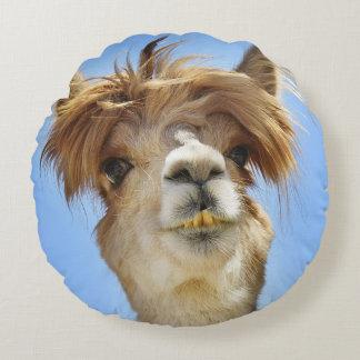Alpaga avec le coussin fou de cheveux