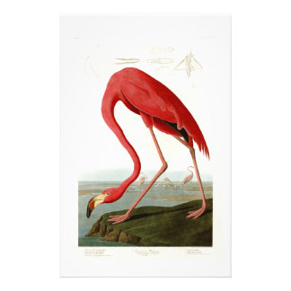 Amerikaanse Flamingo John Audubon Birds van Briefpapier