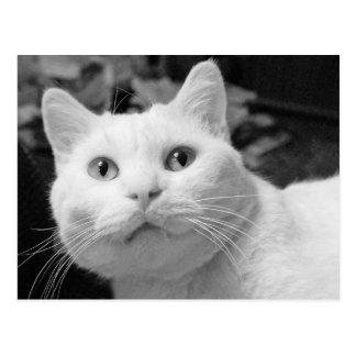Ami noir et blanc d'amour de chat de carte postale