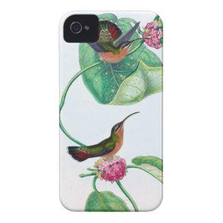 Amour de colibri étui iPhone 4