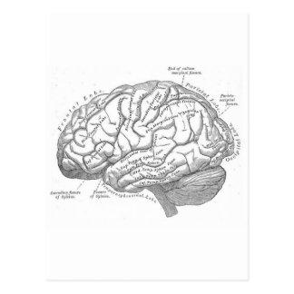 Anatomie vintage de cerveau cartes postales