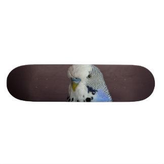 Animal bleu d'oiseau de perruche skateboard