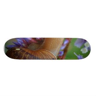Animal d escargot skateboards personnalisés