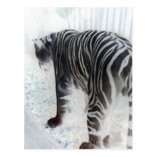Animal sauvage de tigre blanc carte postale