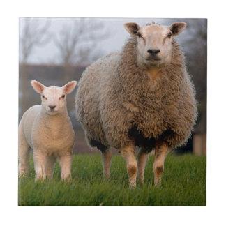 Animaux de ferme de moutons et d'agneau petit carreau carré