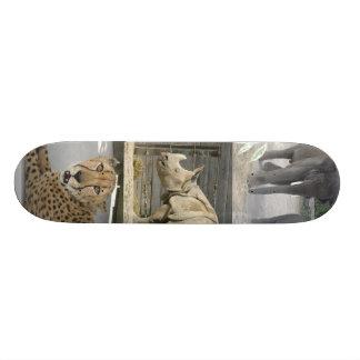 animaux skateboards customisés