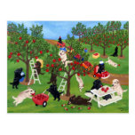 Apple cultivent Labradors