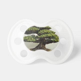 Arbre de bonsaïs de White Pine de Japonais Tétines