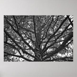 posters arbre noir blanc. Black Bedroom Furniture Sets. Home Design Ideas