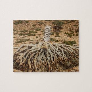 Arbre mort de sang de dragon, île de Socotra, Puzzle