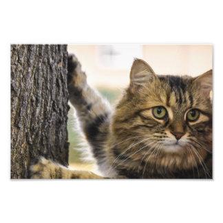 Arbre pelucheux d'escalade de chat impression photo