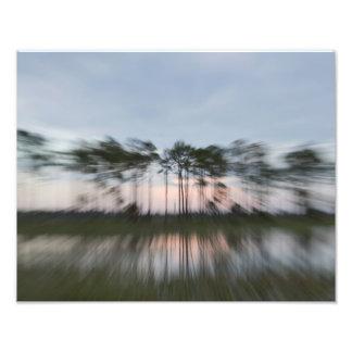 Arbres abstraits impression photo