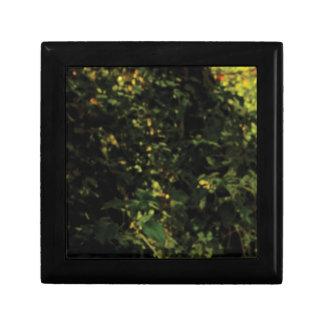 arbres dans le buisson boîte à souvenirs