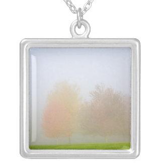 Arbres de chute enveloppés en brume collier