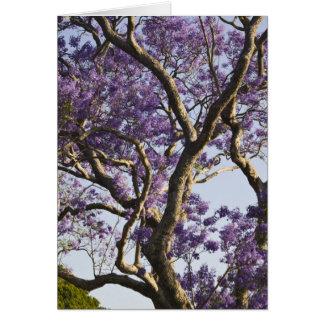Arbres de floraison de Jacaranda en nouveau parc Carte