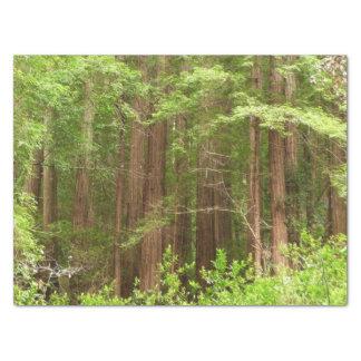 Arbres de séquoia au monument national en bois de papier mousseline