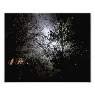 Arbres la nuit impression photo