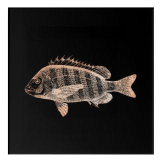 Art Mural En Acrylique Or de rose de noir d'océan de mer de poissons de